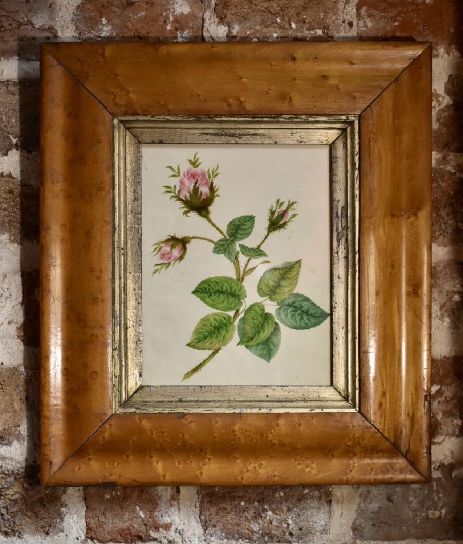 Regency watercolour - Pink roses