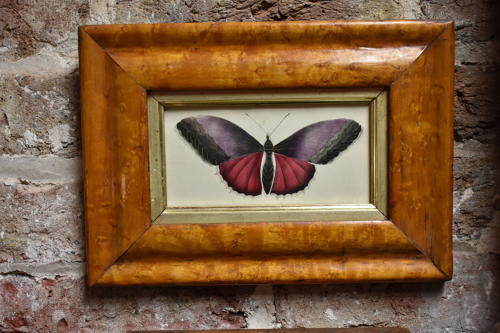 Early 19th century watercolour - Butterfly