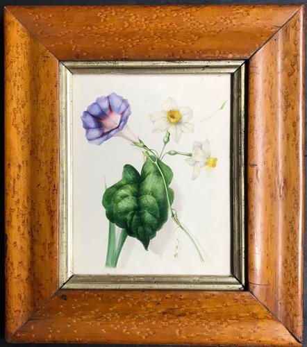 19th century watercolour - Convolvulus and Narcissus
