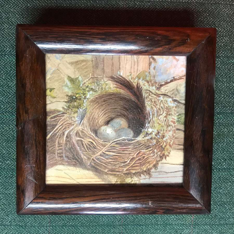 19th c watercolour - bird's nest