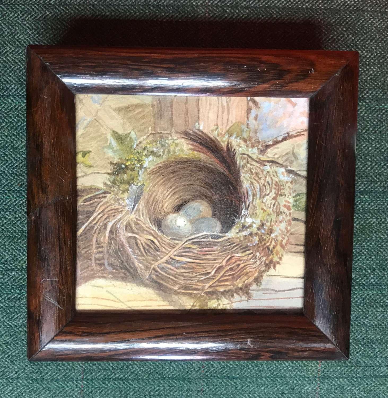 19th c watercolour - bird's nest