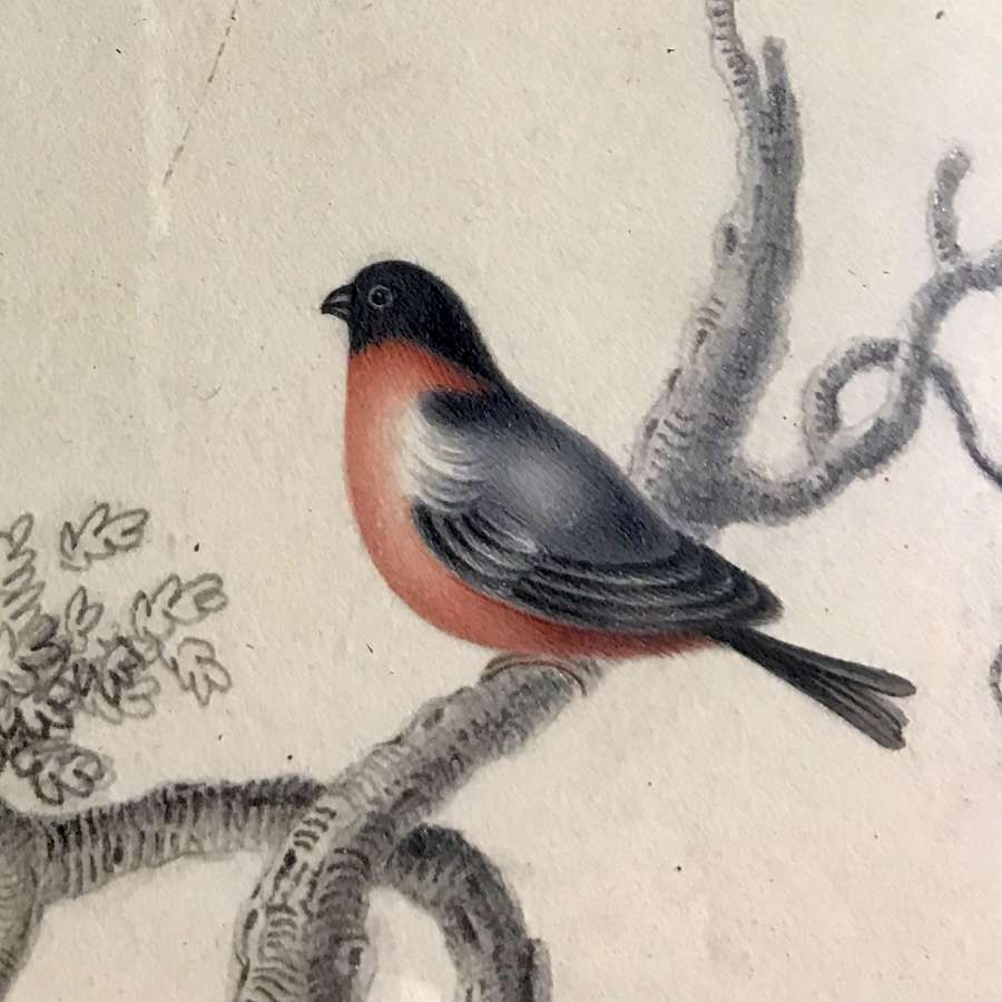 19th c. watercolour - red breasted bird