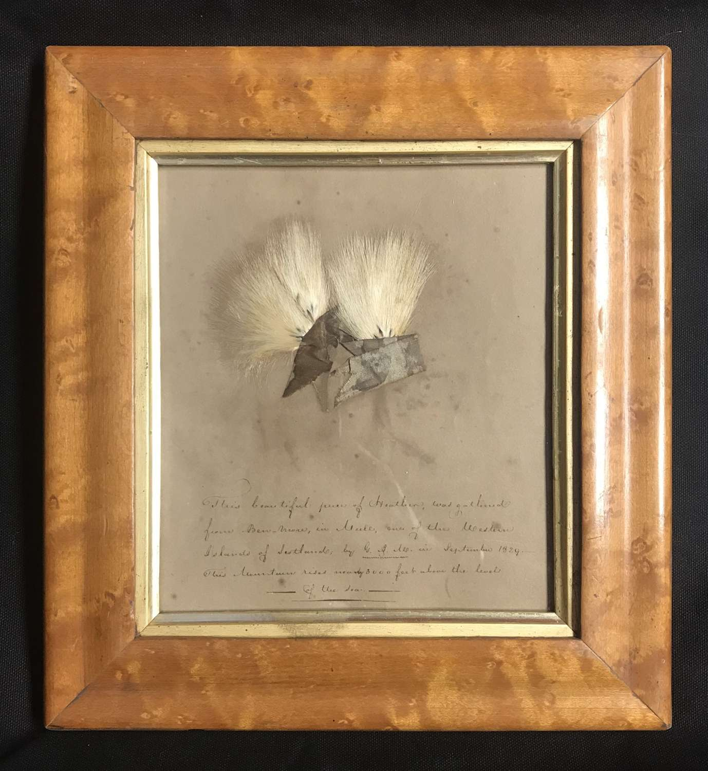 Framed memento - Georgian Scottish Heather