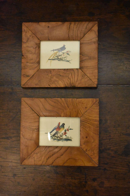 19th c. original watercolours of exotic birds in elm frames